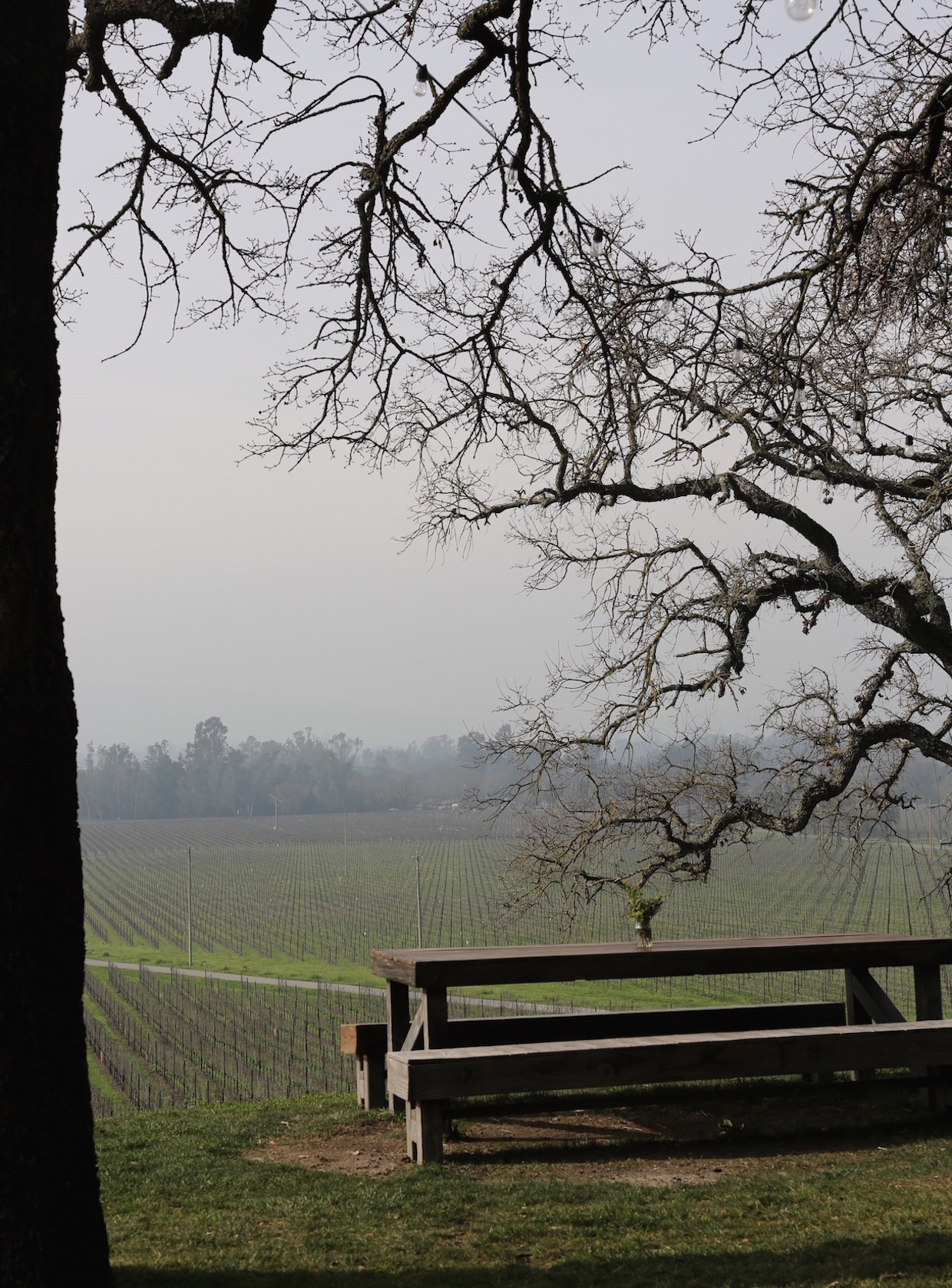 best-sonoma-wineries