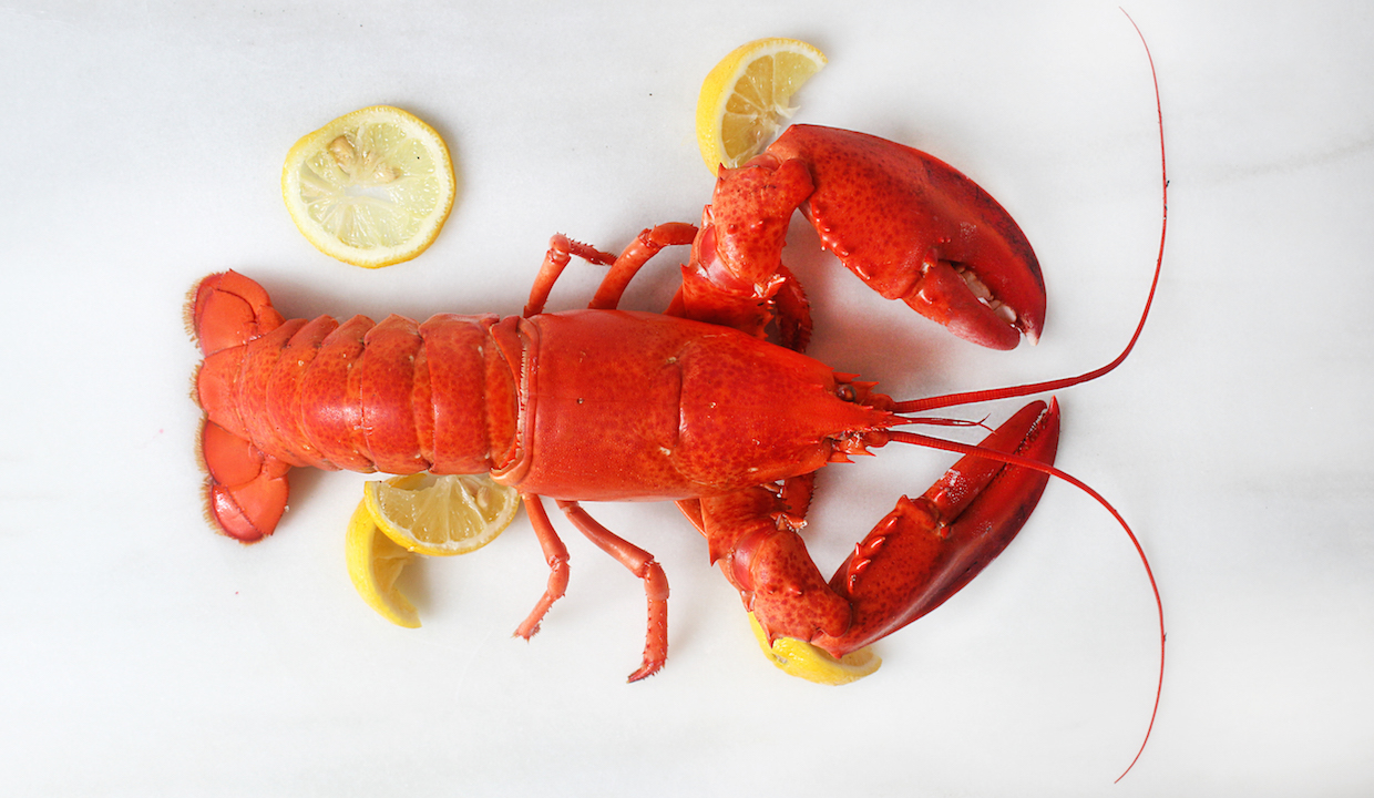 how to steam lobster