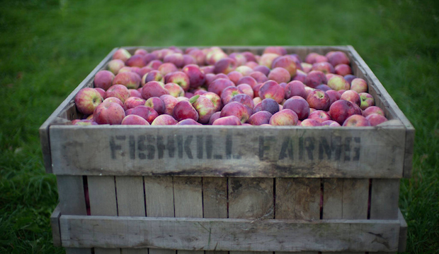 Best Apple Picking Orchards Near New York Fall 2015