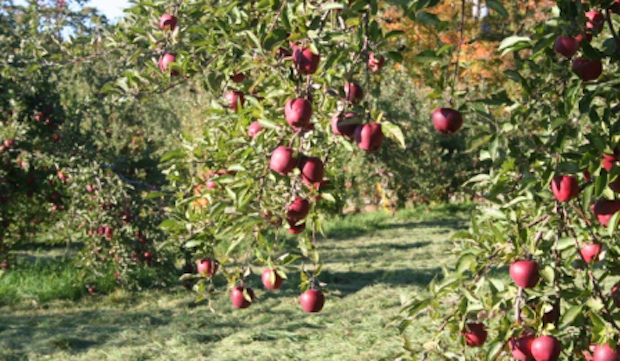 wilkens-fruit-andfir-farm-new-york